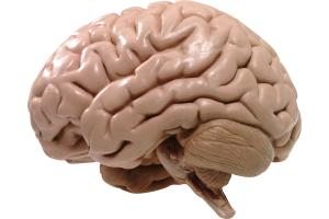 Мозг работает 24 часа в сутки, и у него могут возникнуть сбои.