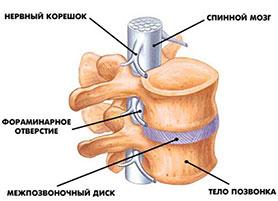 Как избавиться от хруста и боли в суставах позвоночника не созревший тазобедренный сустав