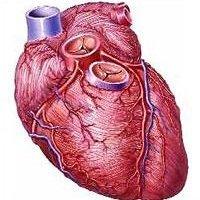 Стенокардия - заболевание сердца.